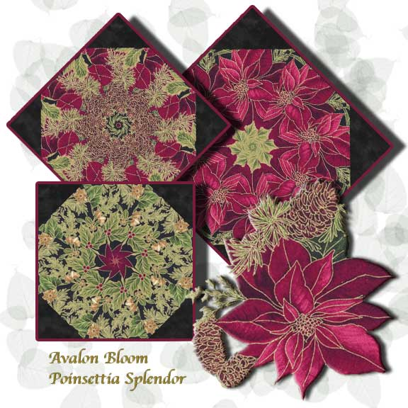 pm220607poinsettiasplendor